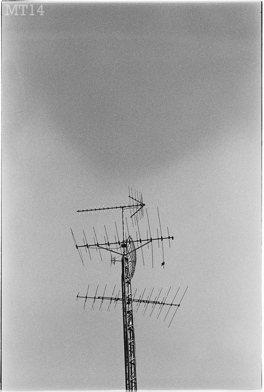 A bird sits atop an old TV antenna near Port Franks, Ontario in June 2014